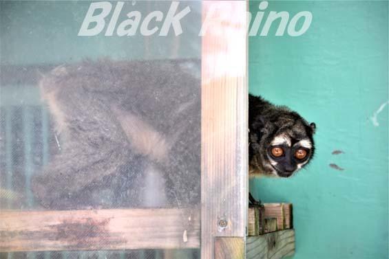 ヨザル02 和歌山城公園動物園