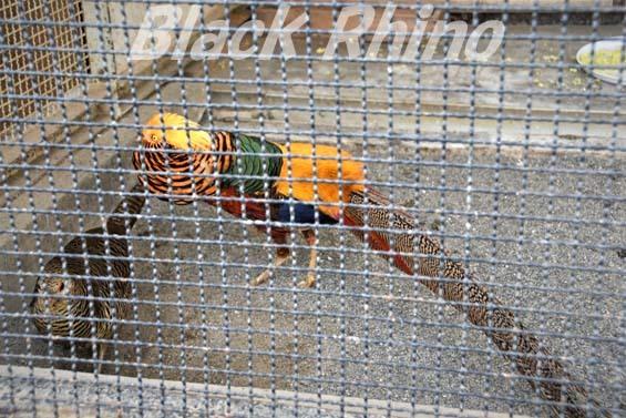 キンケイ01 和歌山城公園動物園