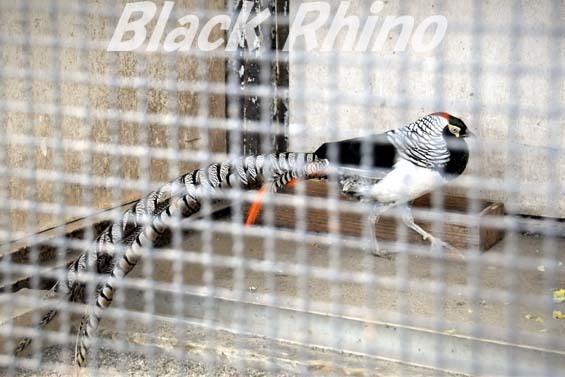 ギンケイ02 和歌山城公園動物園