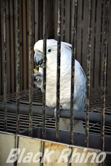 タイハクオウム01 和歌山城公園動物園
