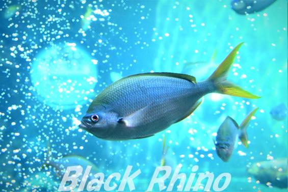ユメウメイロ02 箱根園水族館