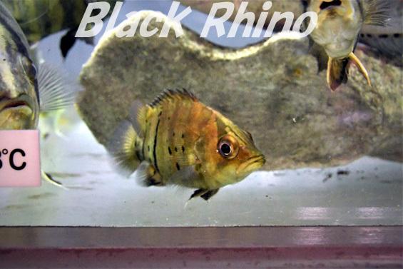 ダトニオプラスワン02 箱根園水族館