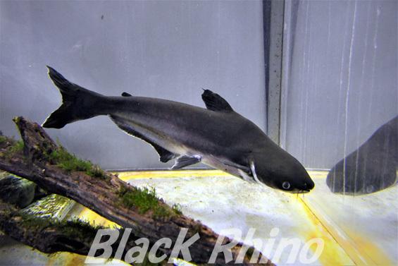 カイヤン01 箱根園水族館