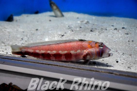 トラギス01 桂浜水族館
