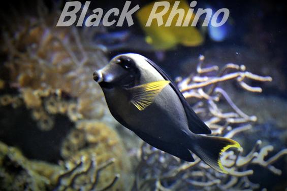 クログチニザ03 鳥羽水族館