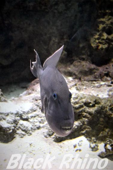 イソモンガラ02 海響館