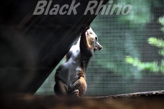 ニホンリス02 盛岡市動物公園