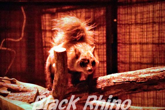 ムササビ01 盛岡市動物公園