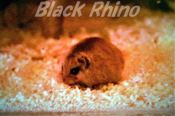 ヤマネ01 盛岡市動物公園