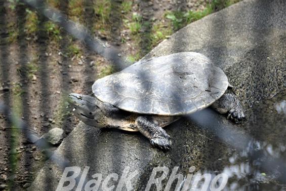 ヒラリーカエルガメ01 八木山動物公園