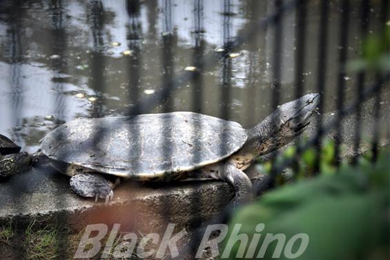 ヒラリーカエルガメ02 八木山動物公園
