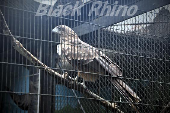 トビ02 八木山動物公園