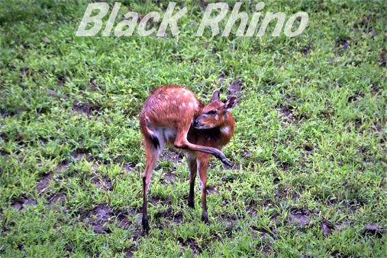 シタツンガ01 盛岡市動物公園