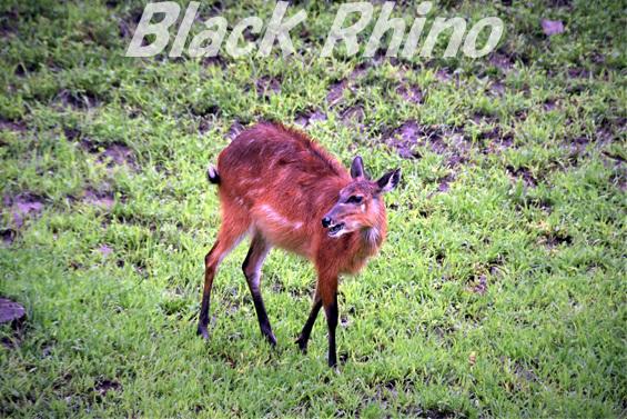 シタツンガ02 盛岡市動物公園