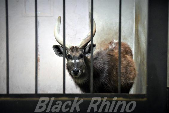 シタツンガ04 盛岡市動物公園