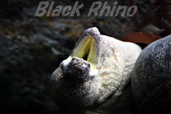 アデウツボ02 渋川マリン水族館