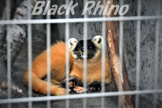 ホンドテン02 八木山動物公園