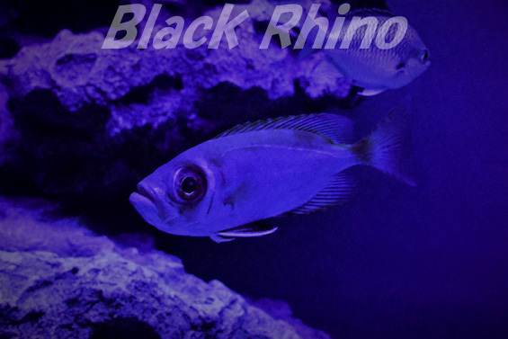 ミナミキントキ02 美ら海水族館