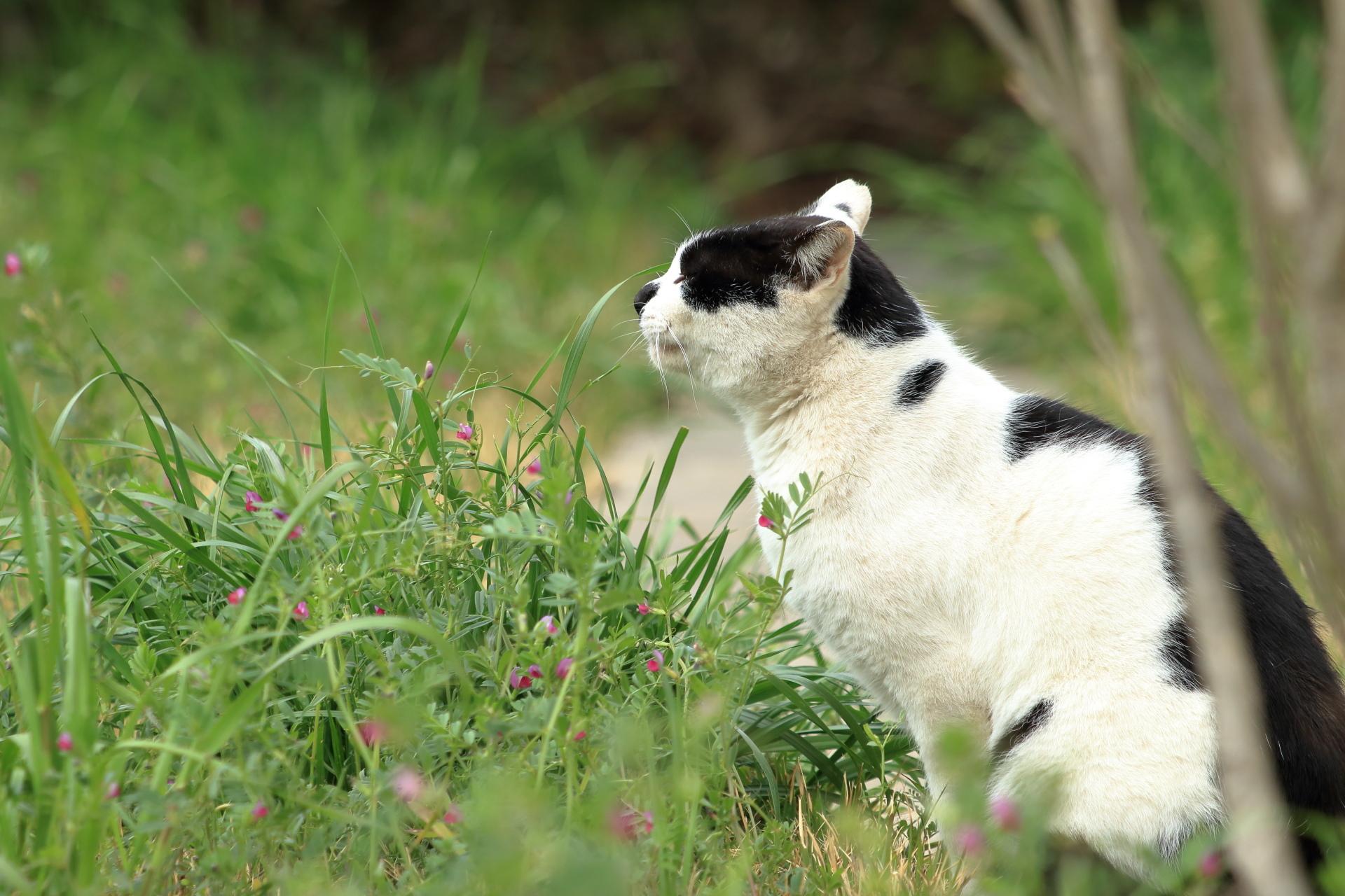 草を選ぶ猫