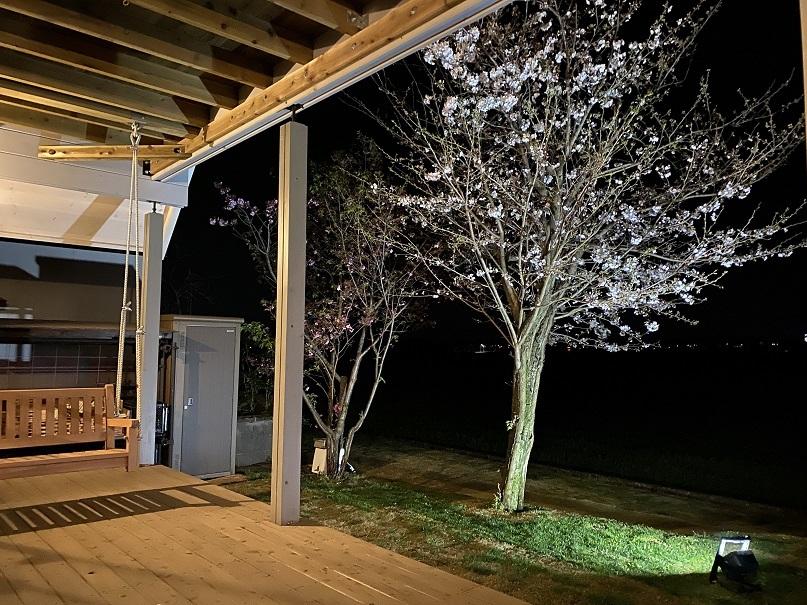 夜桜ライトアップ (2)