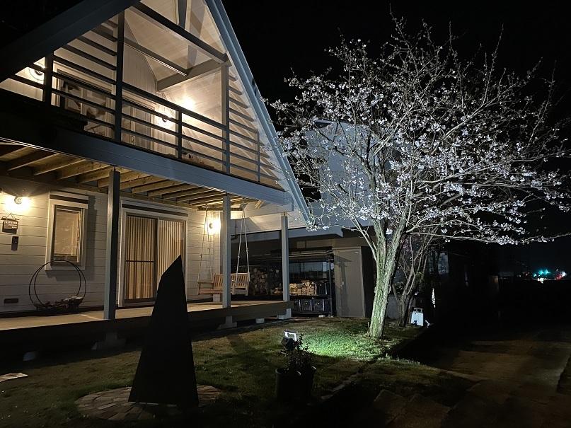 夜桜ライトアップ (1)