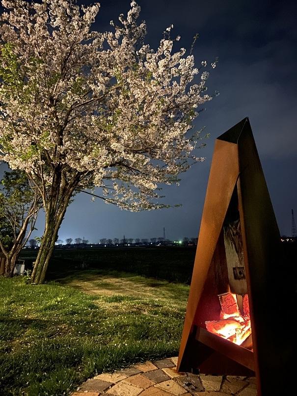 夜桜と焚火 (2)