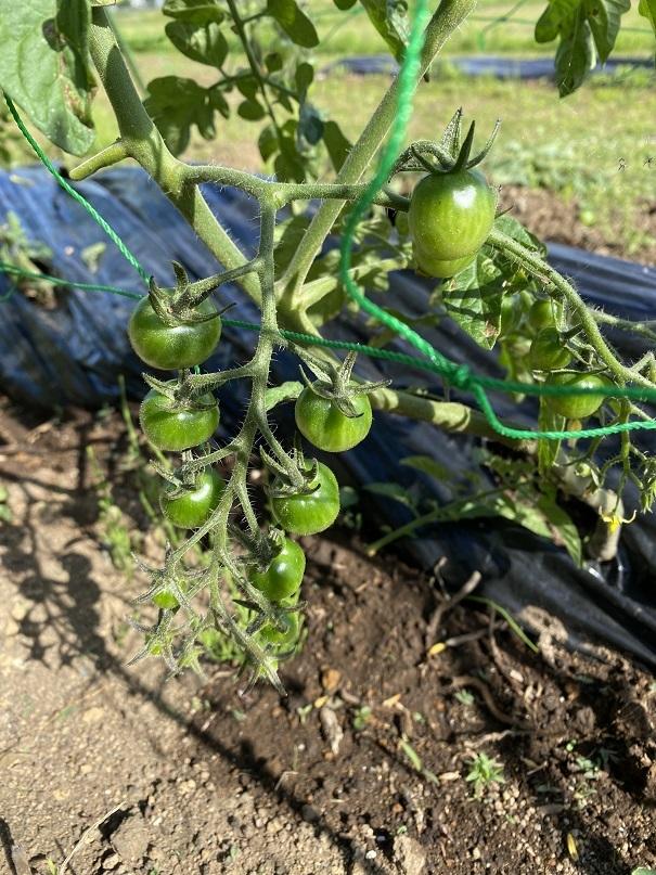 20200524家庭菜園 (3)