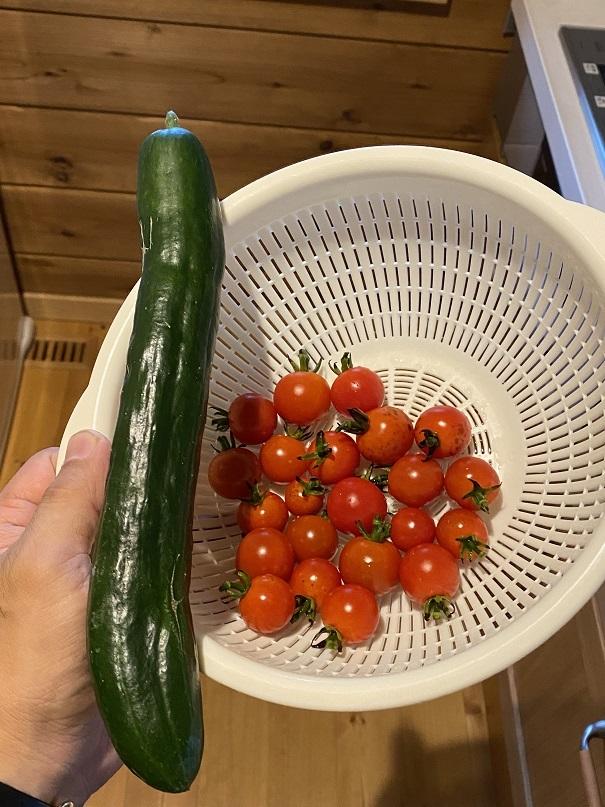 2020-06-09野菜 (7)