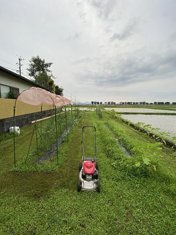 2020-07-02草刈り (4)