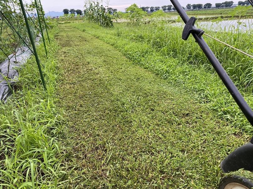 2020-07-02草刈り (2)
