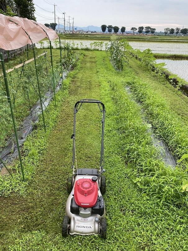 2020-07-02草刈り (1)
