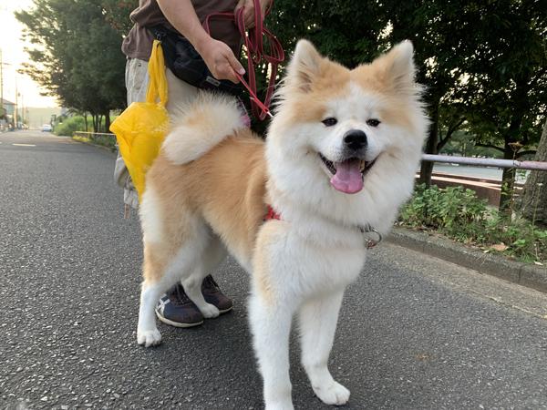 03秋田犬