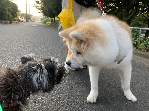02秋田犬