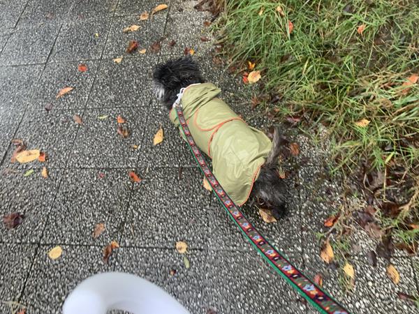 01雨散歩