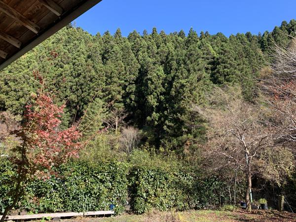 03木の子屋●