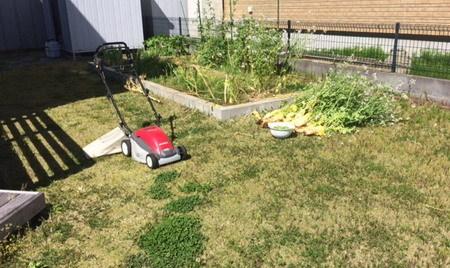 芝刈り前2