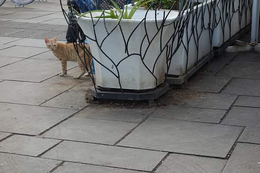 おっと、ネコがこんなところに