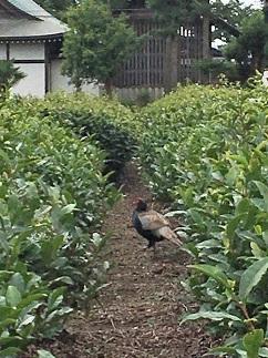 20200722-tokorozawa-14-2.jpg
