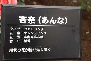 杏奈(2)