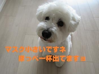 IMG_3936_convert_20200519220359.jpg