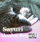 保護猫くん アカシックレコードリーダーさゆり アカシックレコードリーディング