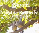 Doves ハト アカシックレコードリーダーさゆり アカシックレコードリーディング