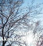 アカシックレコードリーダーさゆり 川辺で桜と青空を見上げて♪ アカシックレコードリーディング