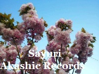 青空と八重桜と アカシックレコードリーディング アカシックレコードリーダーさゆり