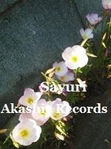 アカシックレコードリーディング アカシックレコードリーダーさゆり ブロックと縁石の間のお花
