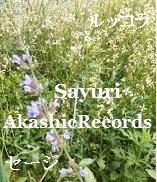 アカシックレコードリーディング セージ ルッコラ アカシックレコードリーダーさゆり