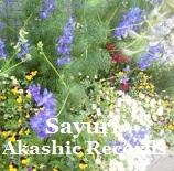 アカシックレコードリーディング アカシックレコードリーダーさゆり 花壇と季節のお花