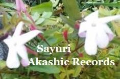 アカシックレコードリーディング アカシックレコードリーダーさゆり ジャスミンの花