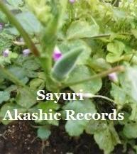 オクラ アカシックレコードリーディング アカシックレコードリーダーさゆり