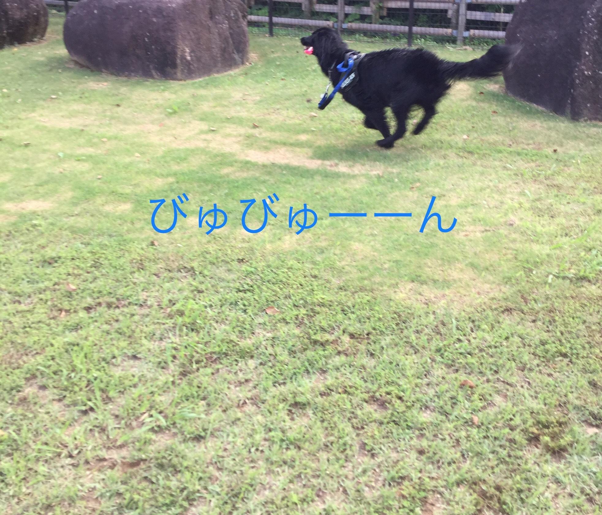 IMG_E2215.jpg